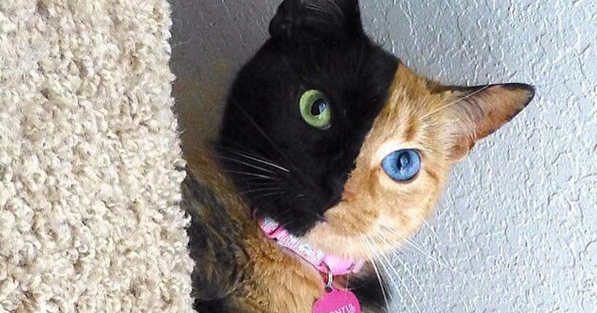 12 кошек c необычным окрасом
