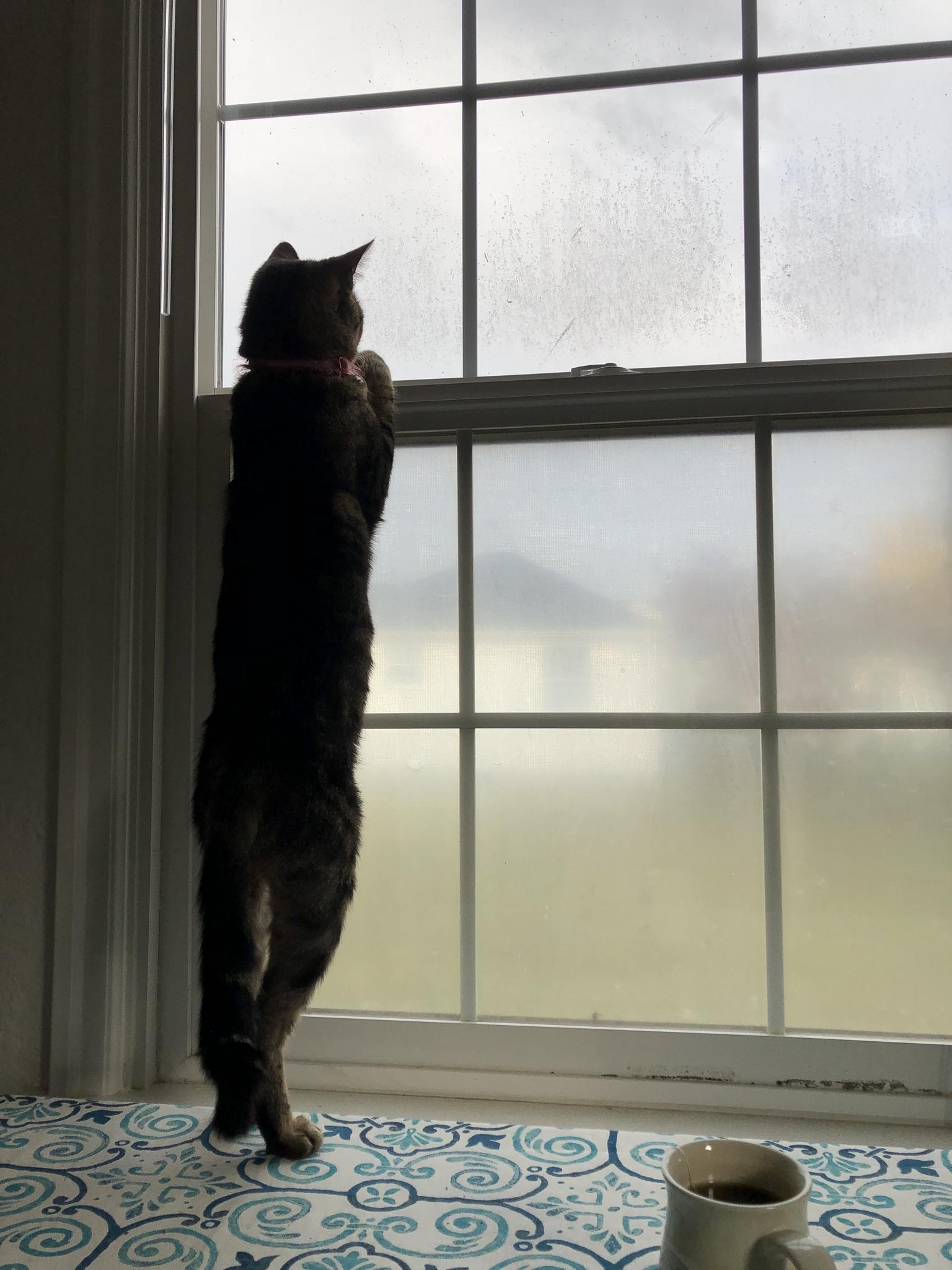 Картинки кошка ждет