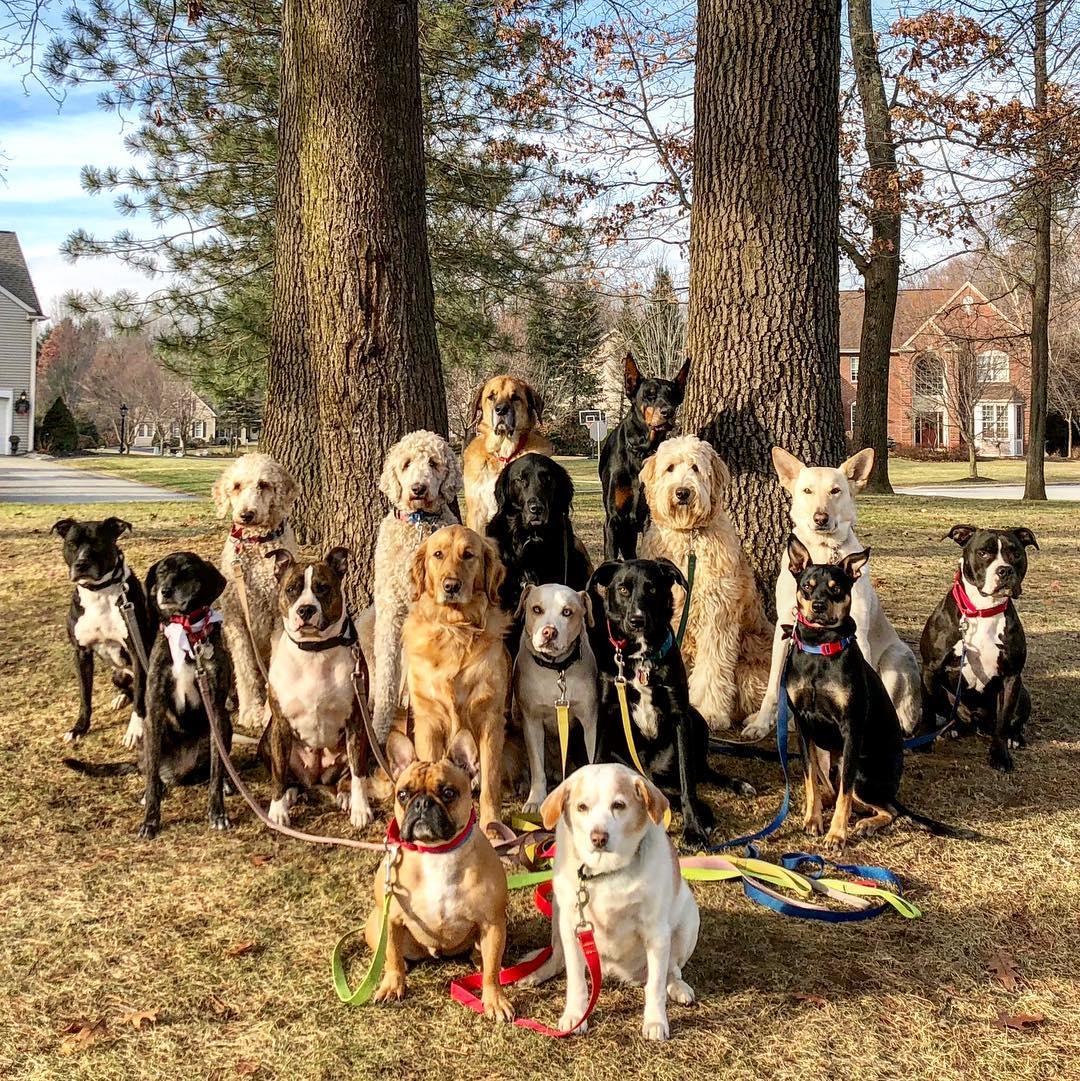 система картинки собак разных пород вместе орла