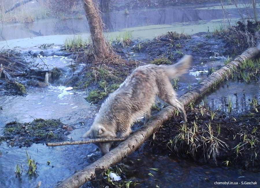 Источник фото: chornobyl.in.ua